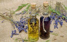 Piante e benessere: la fitoterapia e il sistema immunitario